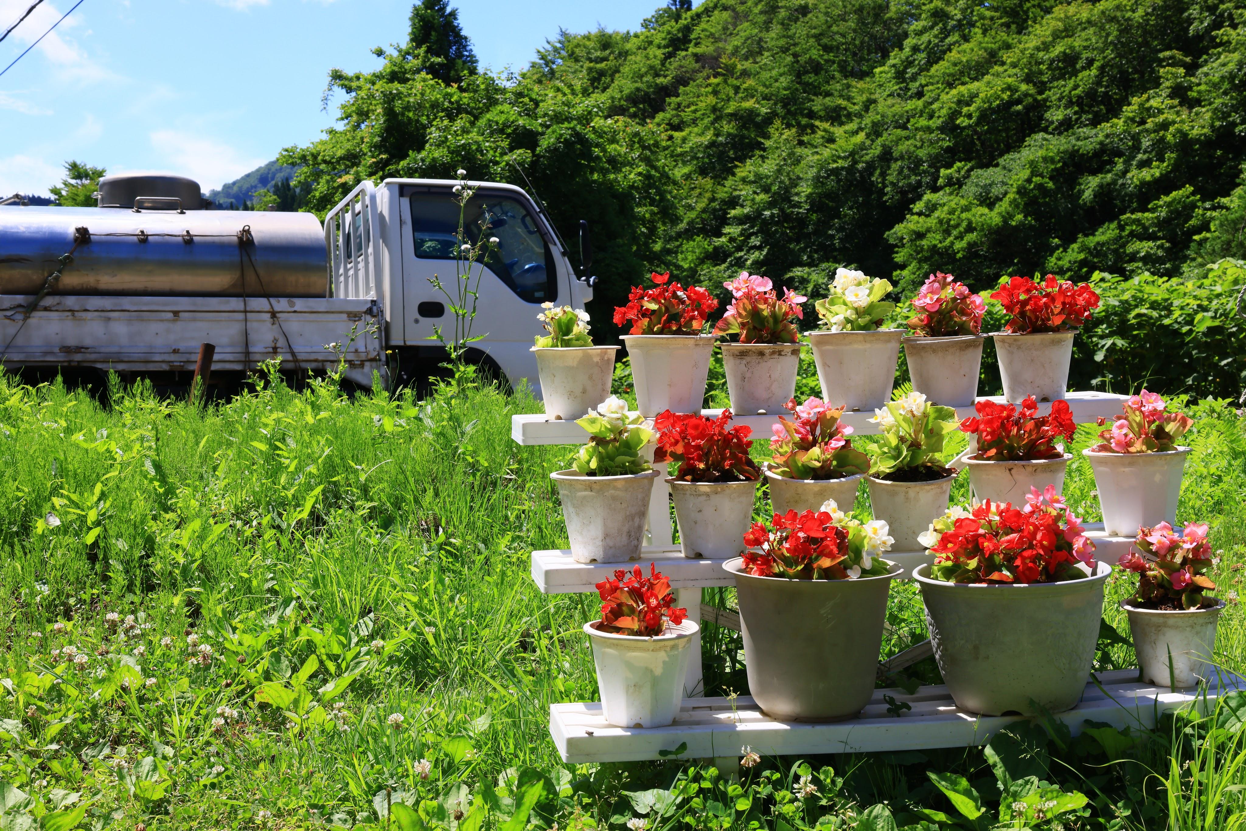 初夏の花と集乳車