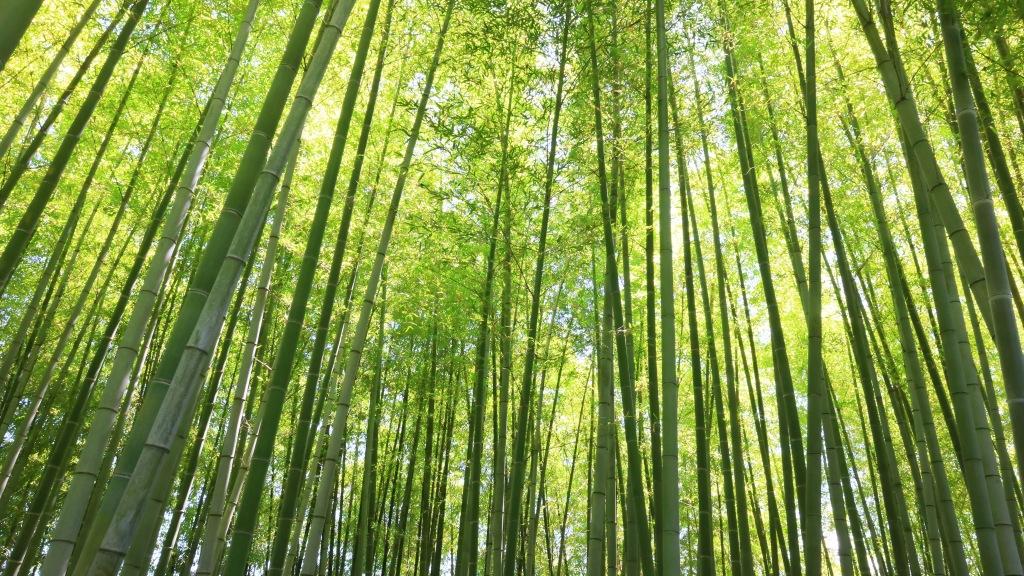 まっすぐに伸びた竹林