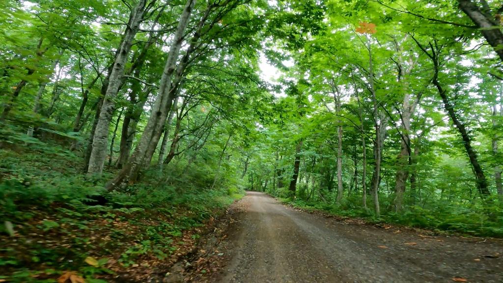 新緑の林道